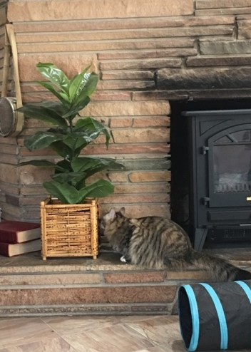 by fireplace