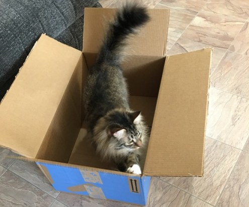 Foster with Walmart box