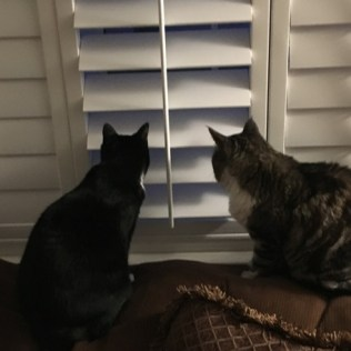 both at window