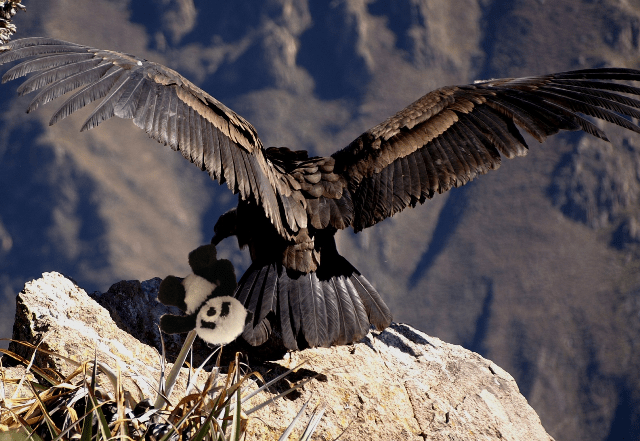 panda and condor nest small