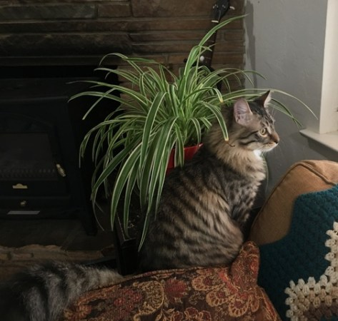 by spider plant
