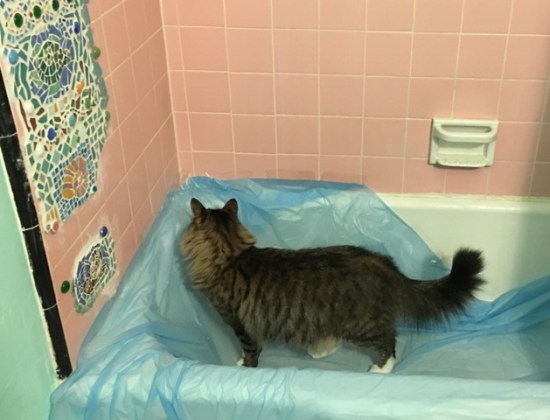 Foster in tub