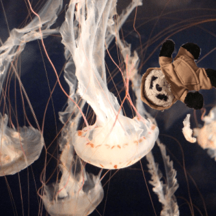 a panda with jellyfish