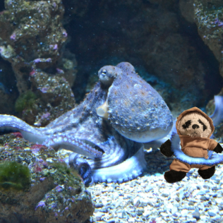 a with octopus