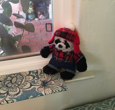 panda on windowsill