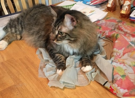 Foster with tablecloth.JPG