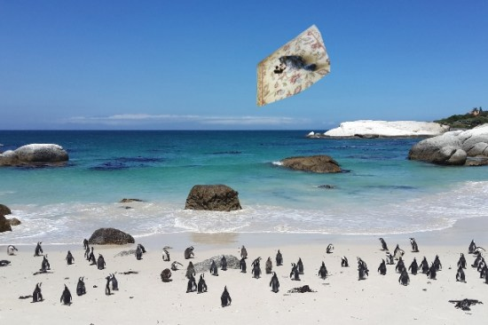 a flying over penguins