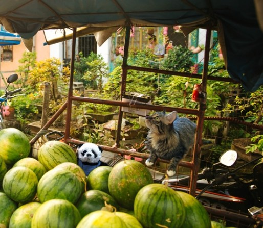 a panda in watermelons