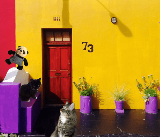 a by yellow house with Luna