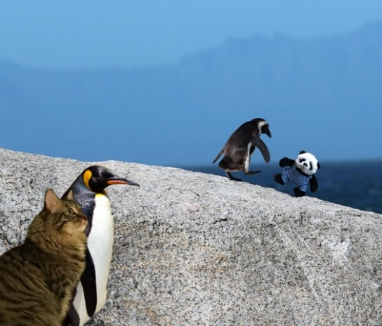a panda and penguin on rock with other