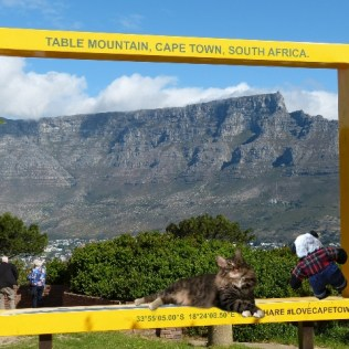 a table mountain sign