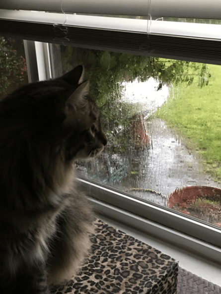 Foster looking at rain 2