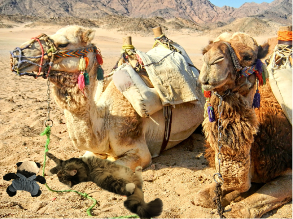 a foster with camel leash