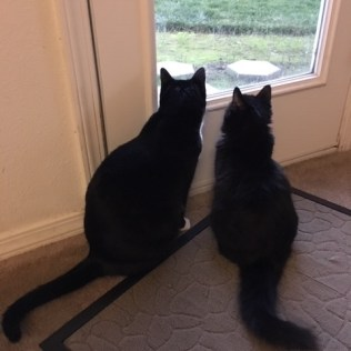 inky and maggie by window