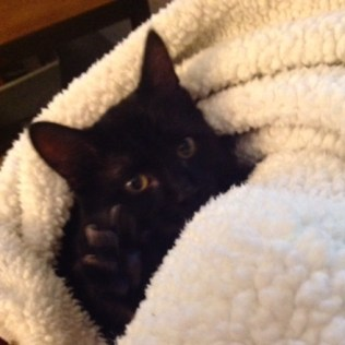 inky with blanket