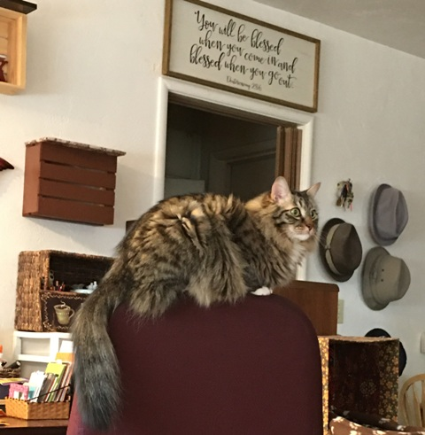 Foster on top of chair