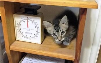 on shelf