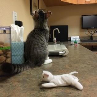 cat-toy-at-vet