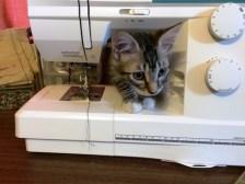 sewing-machine-2