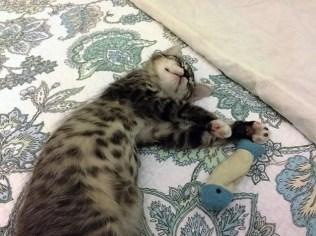 sleeping-with-fish