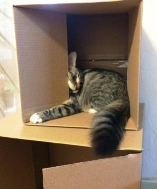 boxes-4