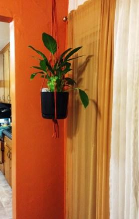 plant-hanging