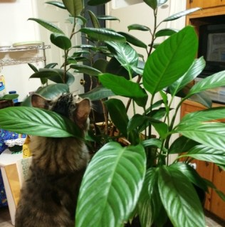 plant-on-island