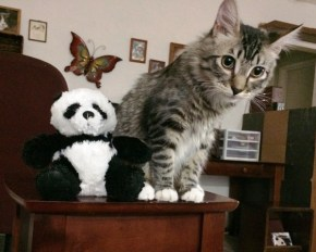 with-panda-on-table