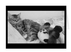 foster panda card