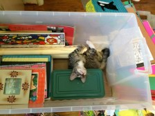 helping in box
