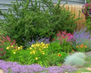 Perennial Side Yard