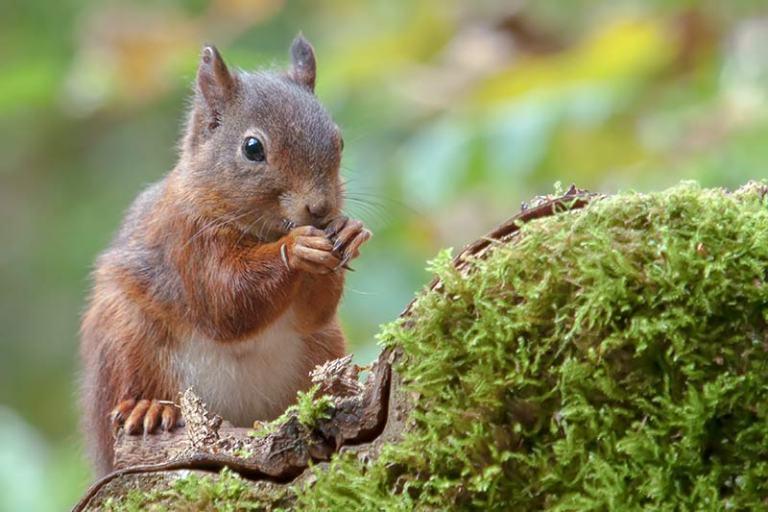 klik hier om meer foto's van eekhoorns te bekijken