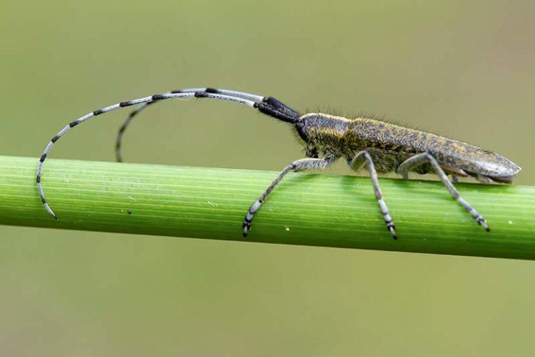 klik hier om meer foto's van overige insecten te bekijken