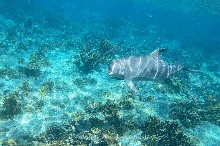 reizen, curaçao, dolfijnen, open-zee, vrijheid