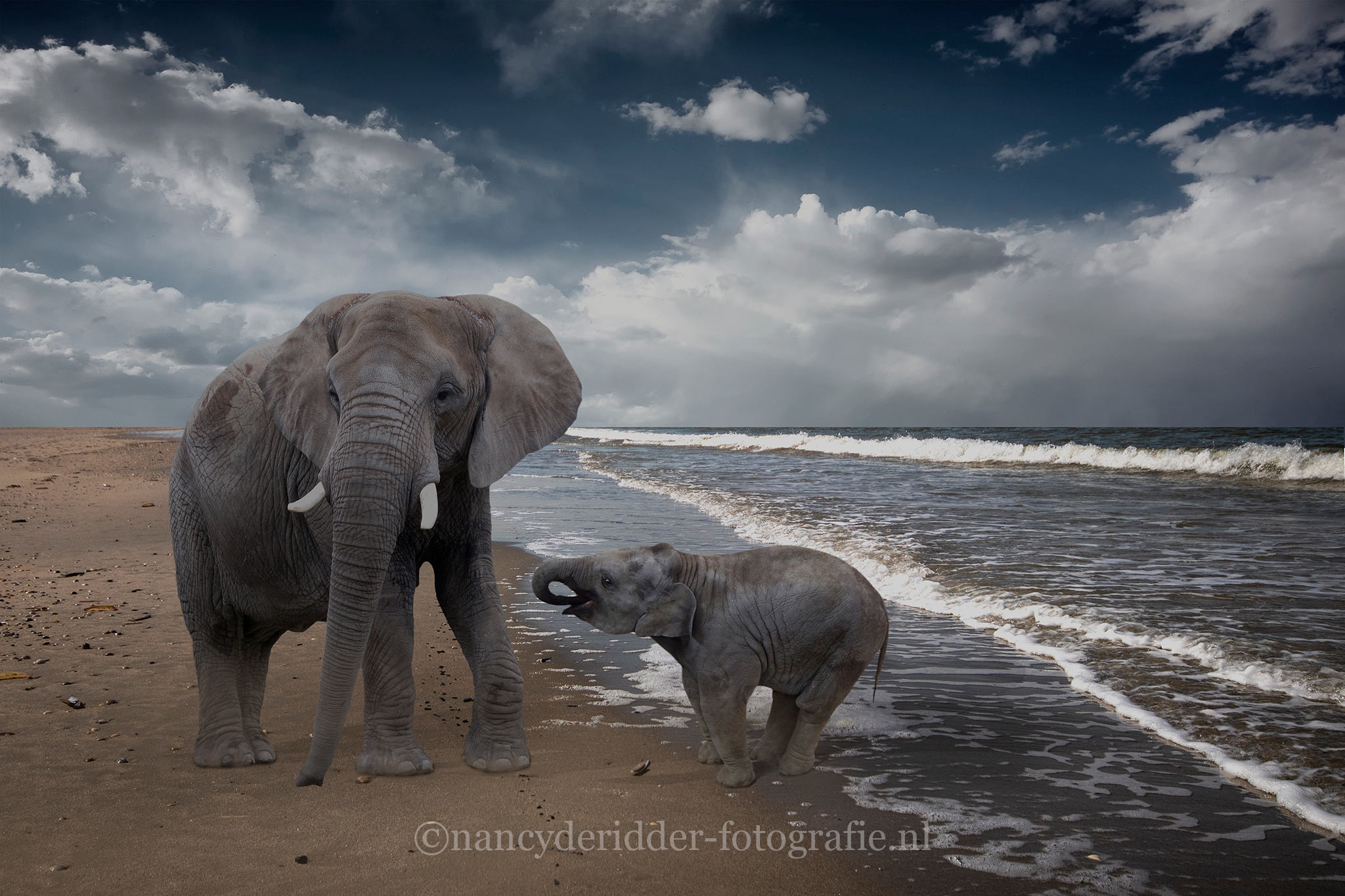 Elephants on the beach