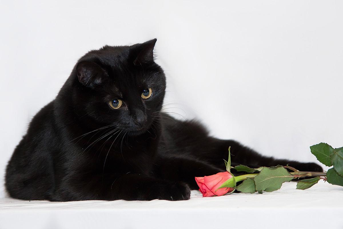 Yentl, beslissing, kitten