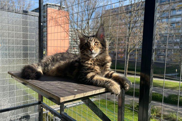 kattenren, Cooper, balkon