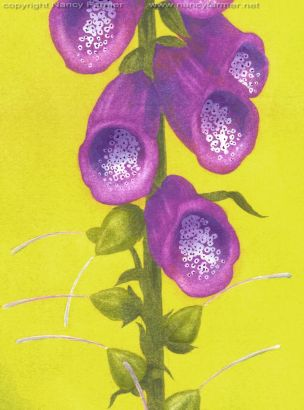 Close-up of the actual Foxglove flowers