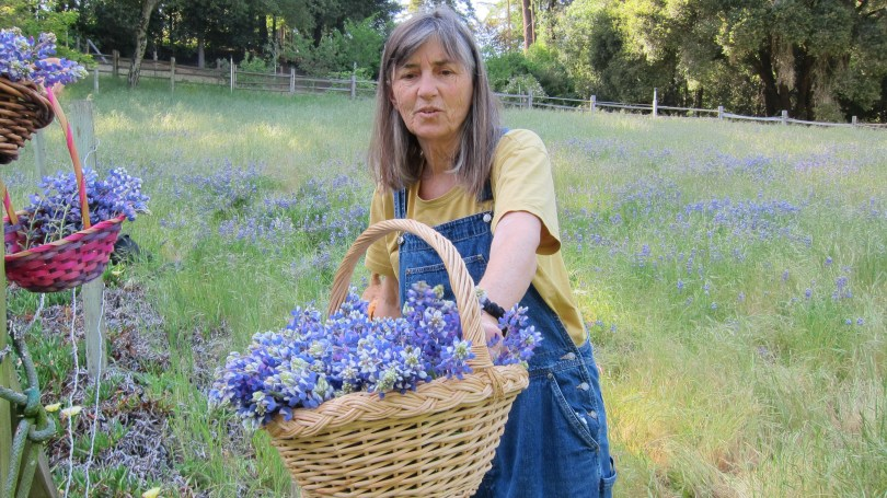baskets-of-lupines-in-pasture-with-woman-nancy-kay-brown