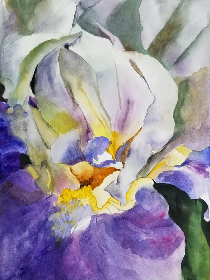A close up of a purple and white bearded iris with deep green leaves.