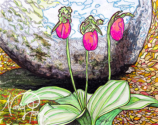"""NH Lady Slippers"" Watercolor and Ink on Paper (2015 11x14)"