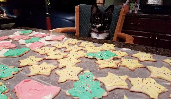 My baking assistant these days. #holidays #baking #cookies #Christmascookies