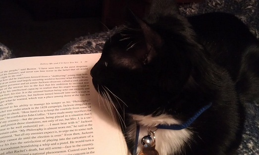 Things to love about #winter! #cats #kitty #reading