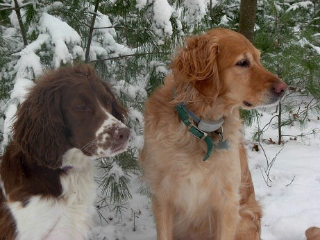 Things to love about #winter! #dogs #pets #golenretrievers #spaniels