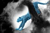 cheetah-459761