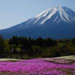 富士芝桜まつりのアクセスと駐車場情報!見頃と開花はいつ?