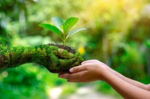 Eco friendly Grounds Maintenance