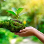 Eco friendly grouds maintenance