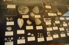 Fossils found at Blue Springs Fossil Site near Hwy 9 and US 178.