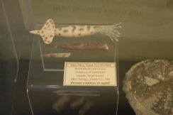Found at highly productive Blue Springs Fossil Site pit dug in 2007-08 during Toyota construction.